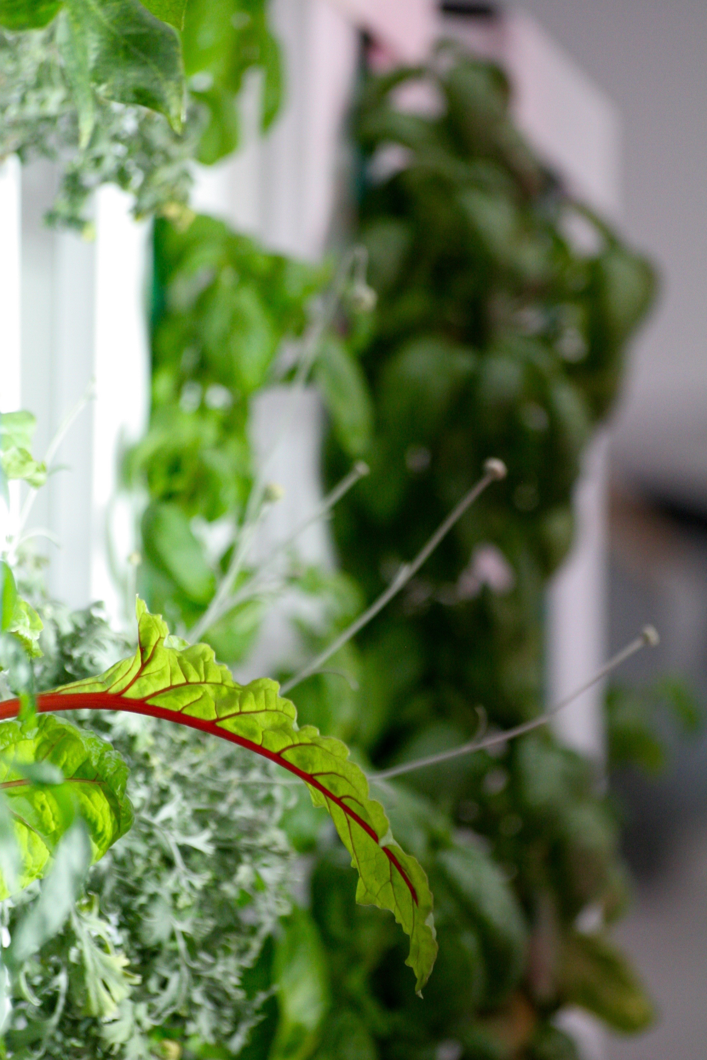 One Day Aeroponic Farming Course